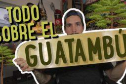 Revalorizando el SKATE – Todo sobre el GUATAMBÚ